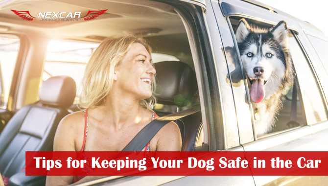 keeping dog safe in car tips